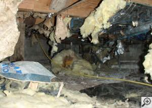 A messy crawl space filled with rotting insulation and debris in Stanwood.
