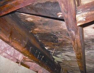 mold and rot in a Bellingham crawl space